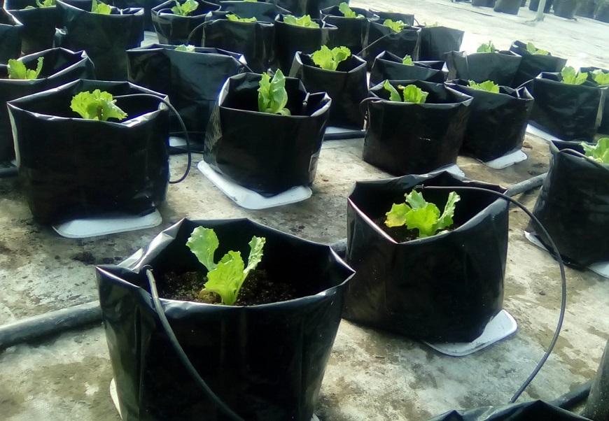 Bioestimulan plantas utilizando Yodo y Selenio.